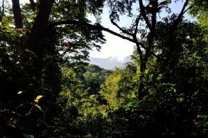 Wald in Uganda